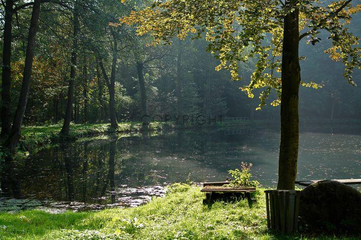 Gerade gefunden auf http://shop313566.fineartprint.de  Lanschaft, Natur, Wald, Weg, Waldweg, Laub, Herbst, Jahreszeiten, See, Wasser, Schatten