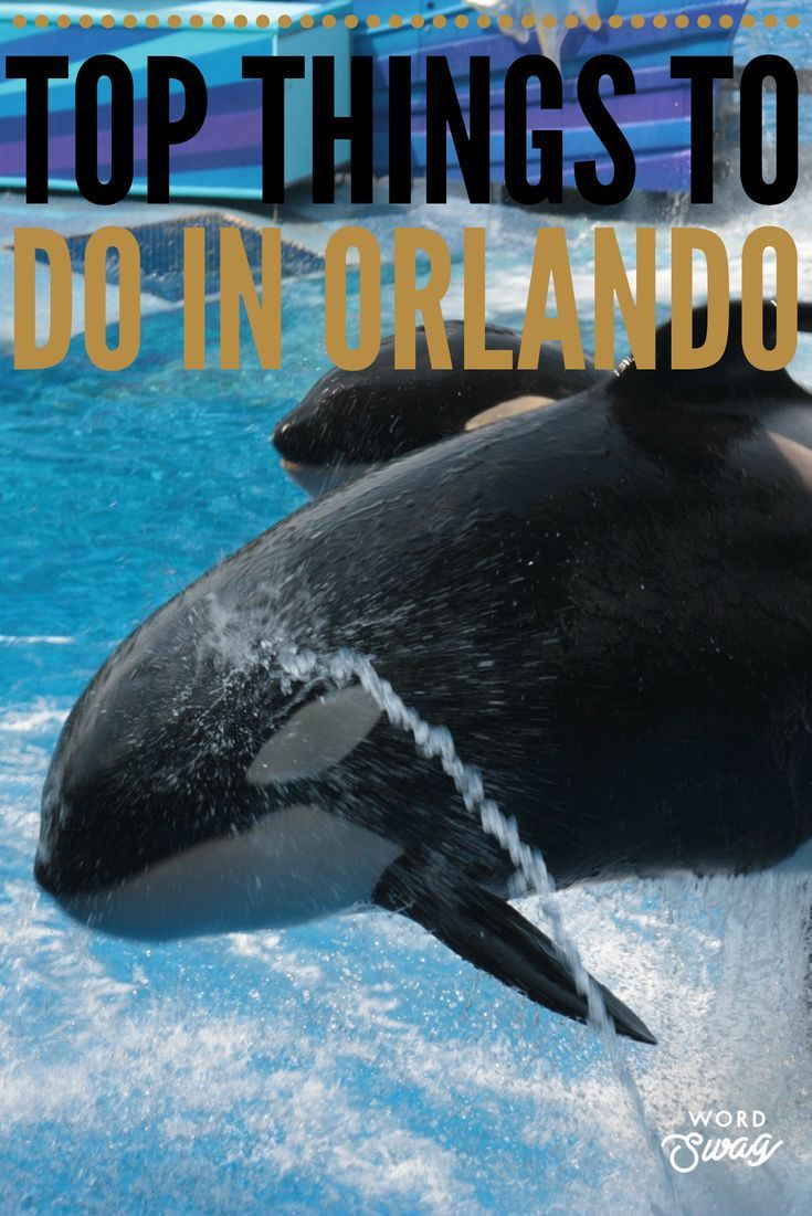 Orlando Florida Is A Top Travel Destination For Families Orlando Has So Much To Offer From Disney World Unive Orlando Travel Seaworld Orlando Florida Travel