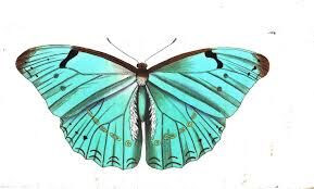 #turquoise #butterfly #nature