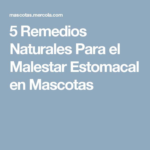 5 Remedios Naturales Para el Malestar Estomacal en Mascotas