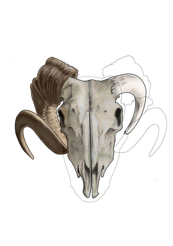 Best 25 Ram Skull Ideas On Pinterest Aries Ram Tattoo