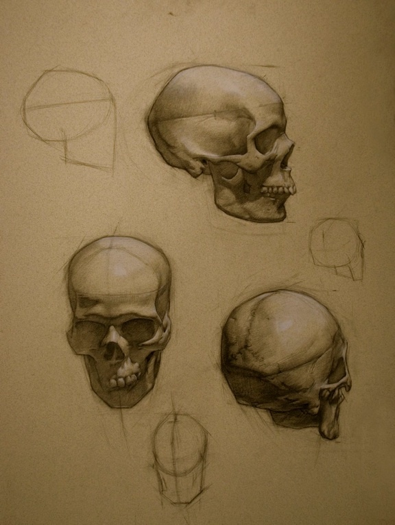 Skull study Colleen Barry