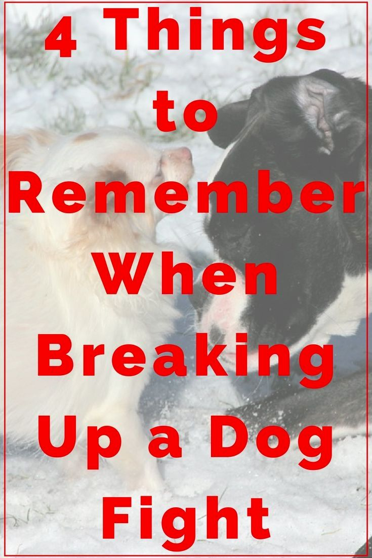 Dog Training Hunting Commands and Pics of Dog Behavior