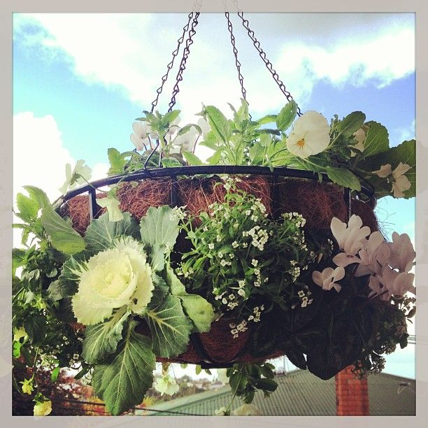 white and green hanging basket