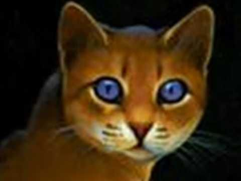▶ The Real Warrior Cats Movie - YouTube PLEASE EVERY WARRIOR CAT FAN VIEW LIKE AND SUBSCRIBE THIS VIDEO TO MAKE THIS MOVIE HAPPEN PLEASE SHARE WITH FRIENDS ON FACEBOOK TWITER INSTAGRAM ANYTHING TO MAKE THIS MOVIE COME LIVE IN MOVIE THEATERS