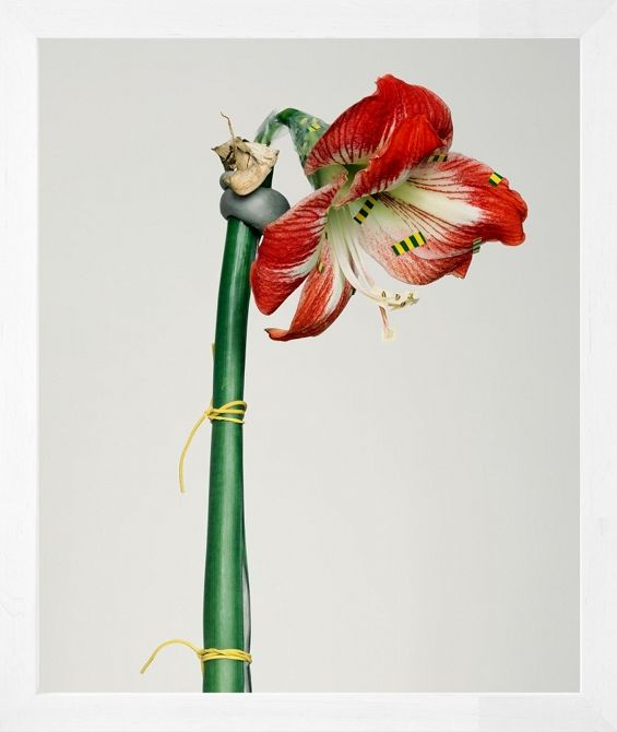 Pawel-Bownik-Reconstructed-Flowers-05