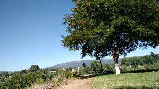 Santa Juana VIII Región