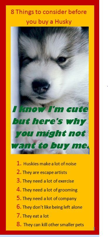 Siberian Husky Puppies for Sale - http://siberian-husky-dog.com/siberian-husky-puppies-for-sale/