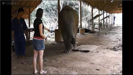 "Elephant's ""Body Awareness"" Adds to Increasing Evidence of Their Intelligence..."