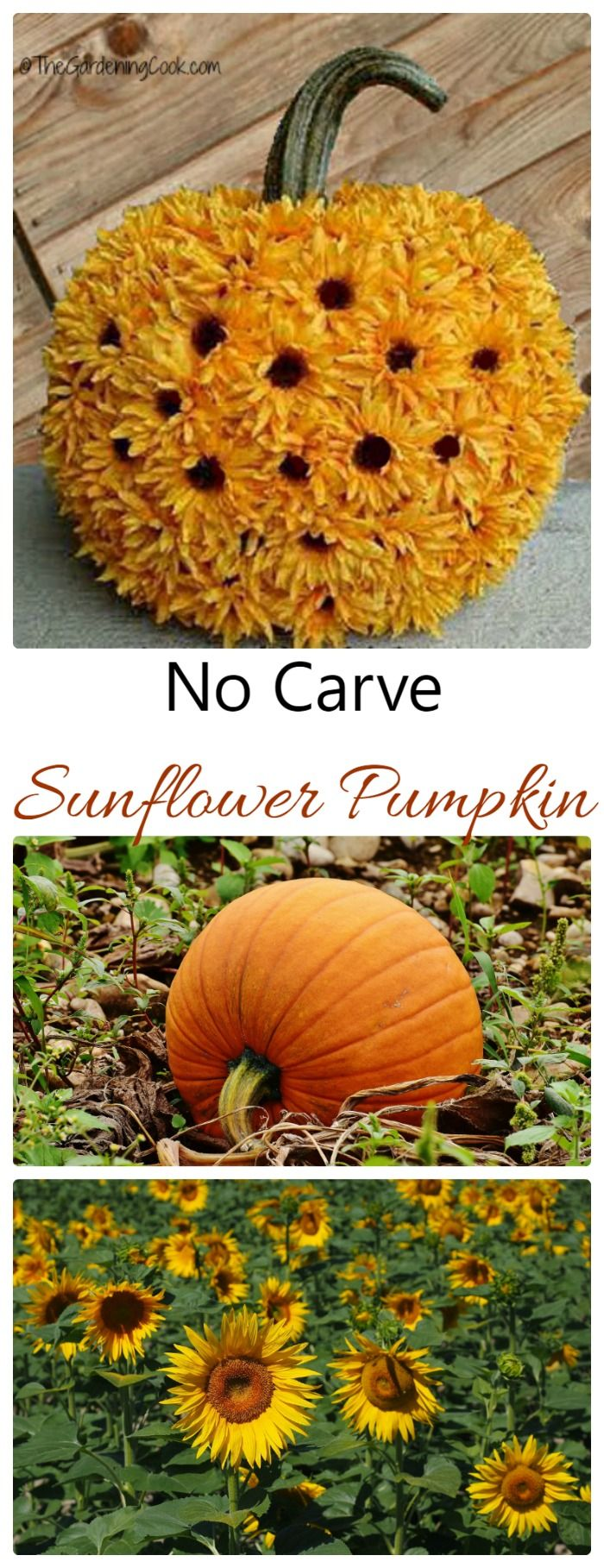 This no carve sunflower pumpkin is mess free and makes such a pretty display. It is easy to do with either real sunflowers or silk ones.