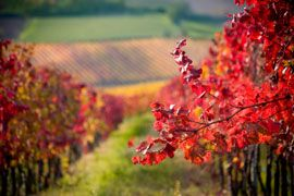 Paarl Vinters,world's first 'red route' because of its focus on wines such as Cabernet Sauvignon, Port and Shiraz