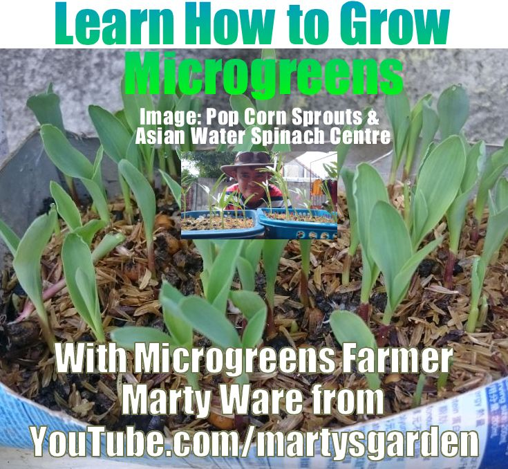 Learn how to grow Microgreens with Marty Ware, Australian Micro farmer. Click the website link or image for tutorials now