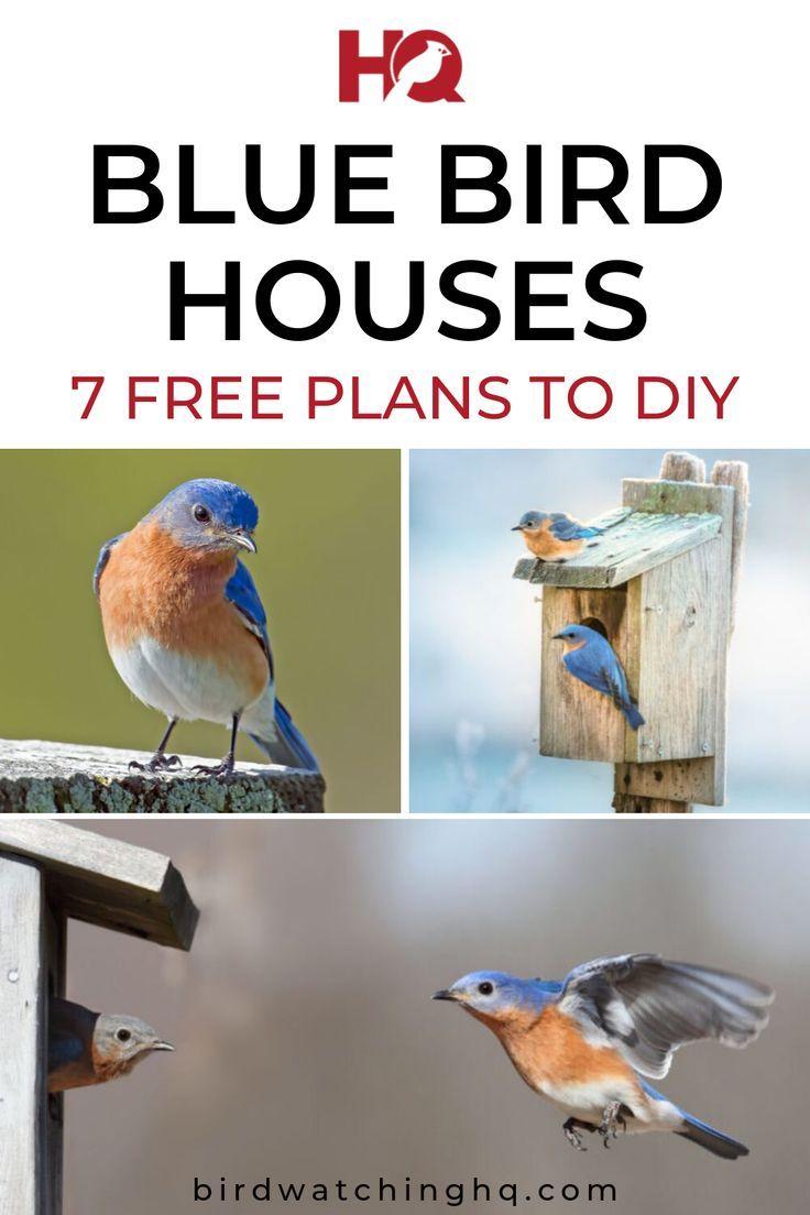 Bluebird Houses The Definitive Guide 7 Free Plans Bird Watching Hq Blue Bird Bluebird House Nesting Boxes Diy