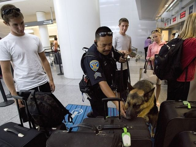 """TSA failure: Investigators able to smuggle weapons past airport checks in 95 percent of tests"""