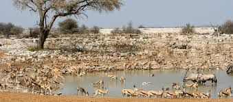 Image result for namibia