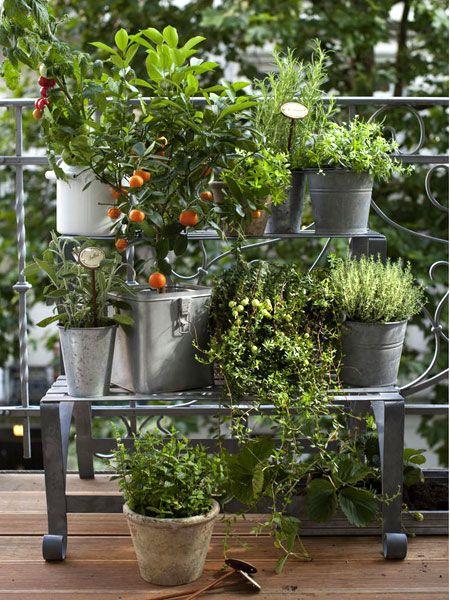 gem se und kr uter auf dem balkon outdoor living pinterest plants nice and plant stands. Black Bedroom Furniture Sets. Home Design Ideas