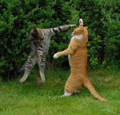 Komik Kediler / Komik Kedi Resimleri » Görülmesi Gereken Yerler