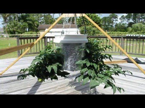 Upside Down Tomatoes : Gardening Ideas Plan