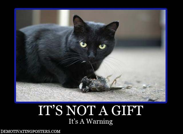 Beautiful Black Cat: Google Image, Feral Cat, Cat Meow, Cat Hunt'S, Demotivational Posters, Image Results, Funny, Cat Lovers, Black Cat