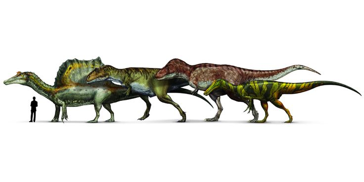 Spinosaurus, Giganotosaurus, Tyrannosaurus and Suchomimus ...