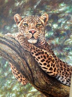 Original Paintings of Leopards by Alan M Hunt