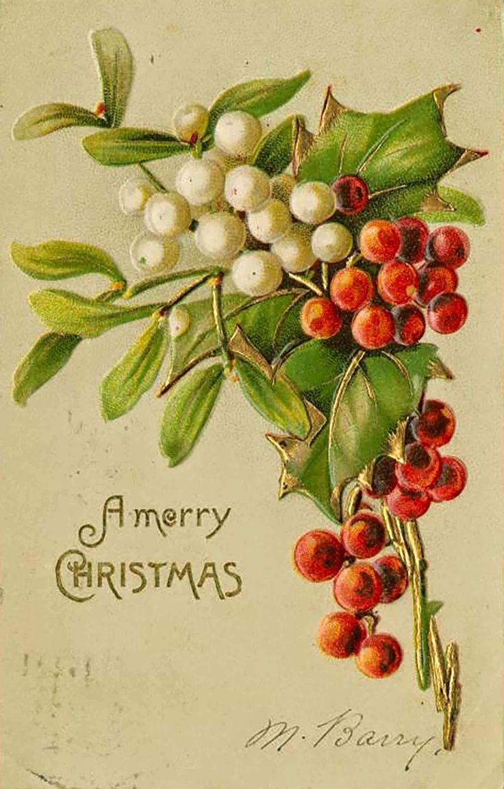 Vintage Victorian Mistletoe and Holly Christmas Postcard