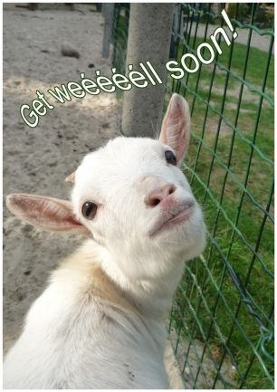 Getwellimageswithgoats Get Well Goat Wwwcreagaatnl Well Images Get Well Wishes Cards