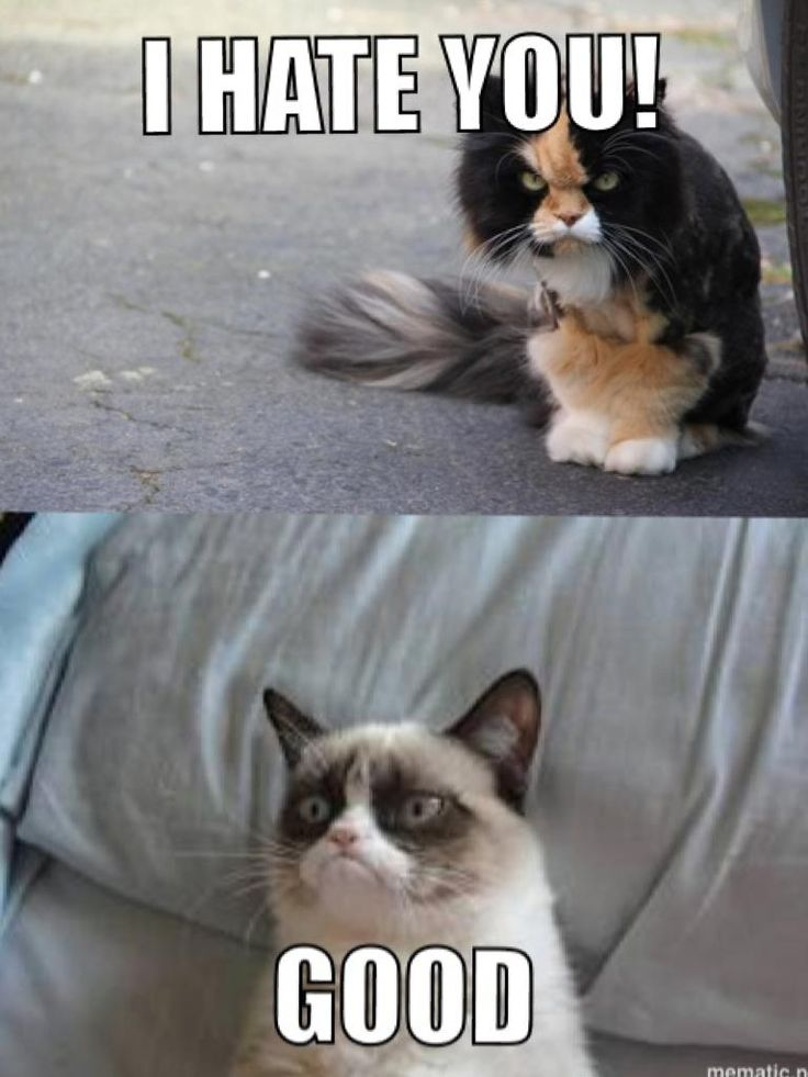Best GRUMPY CAT My Life Images On Pinterest My Life Caramel - 17 cats that are angry grumpy and fed up with everything