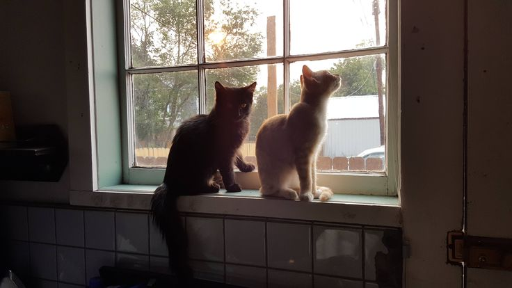 I think my kittens are about to drop the hottest album of the year.