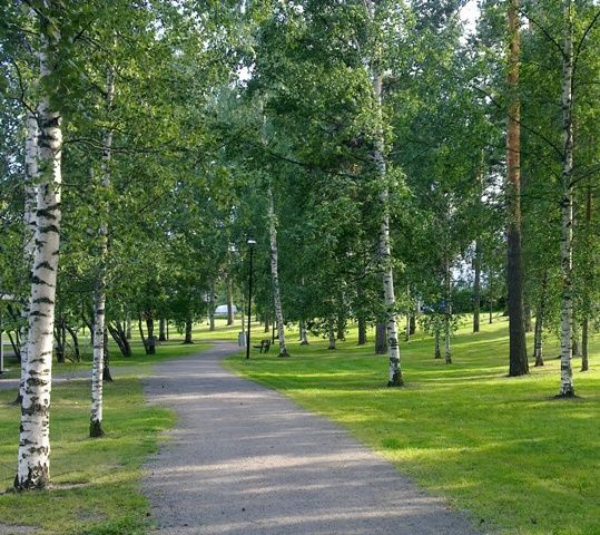 Vellamo Park at Jyväskylä, Finnish landscape with birch and pine