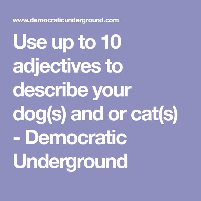 Use up to 10 adjectives to describe your dog(s) and or cat(s) - Democratic Underground