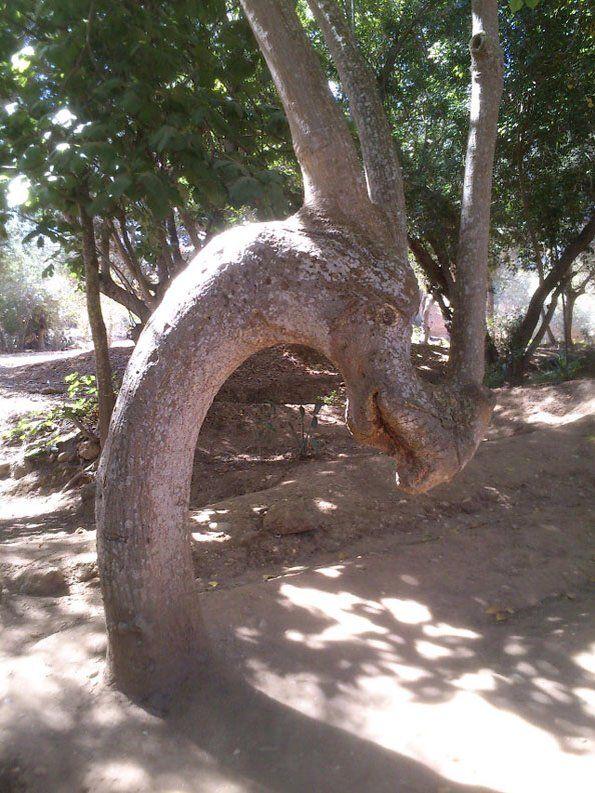 20 olyan fa, amely nem akart átlagos maradni – BuzzBlog