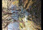 Weesgerus(Nylstroom)