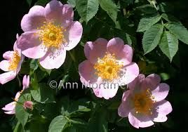 Image result for painting watercolour flowers from photographs