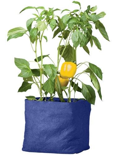 Colorful Tomato Grow Bag