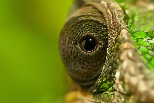 28 Remarkable Reptile Pictures