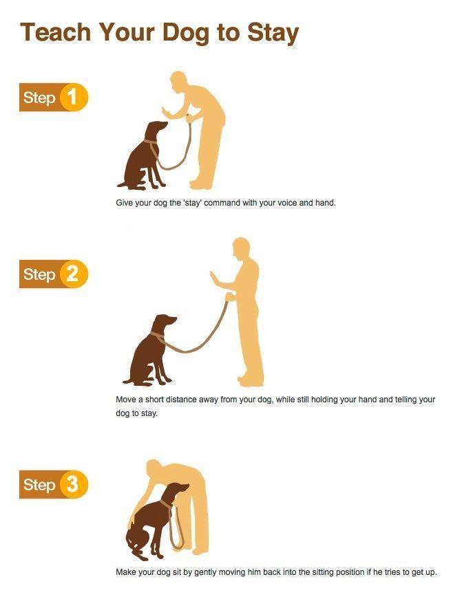 Teach Your Dog To Stay Dog Training Dog Training Obedience Dog