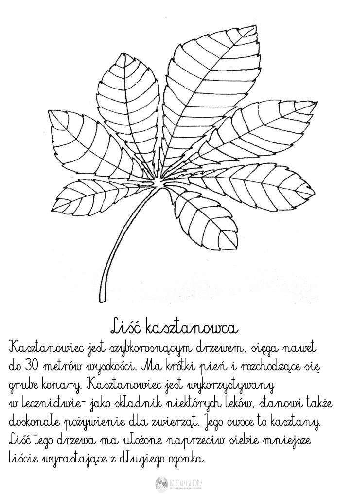 liść kasztanowca - szablon