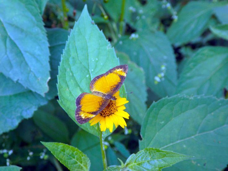 Mariposa amarilla se posa sobre una flor. ¿Necesitas fotos como esta para el contenido de tu web? Visita: www.laweb.com.co/contenido-web/