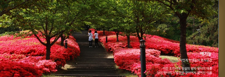 Korea University Seoul