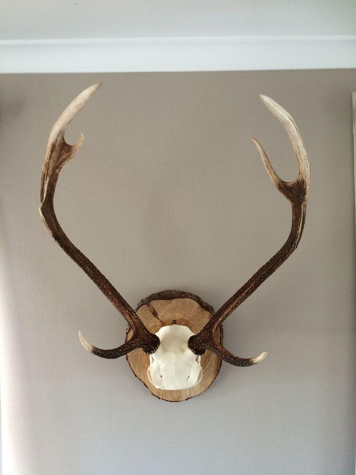 Deer antlers mounted on wood ring