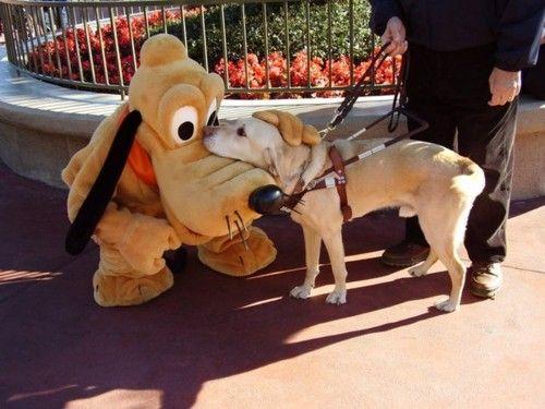 Dog and dog.