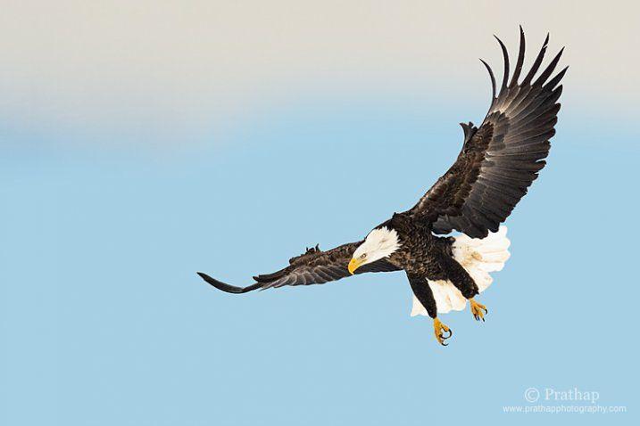 8 conseils pour réussir à photographier un oiseau en vol