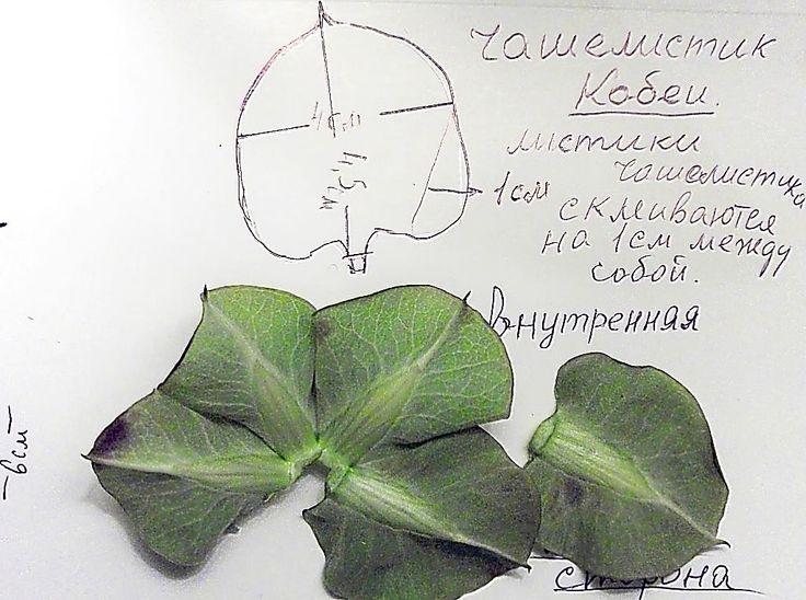 122 Best Flower Anatomy Images On Pinterest Botanical