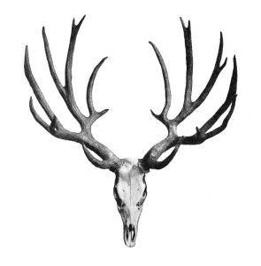 Vintage, Deer antlers and Clip art on Pinterest
