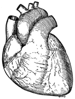 25+ ide terbaik realistic heart drawing di pinterest, Muscles