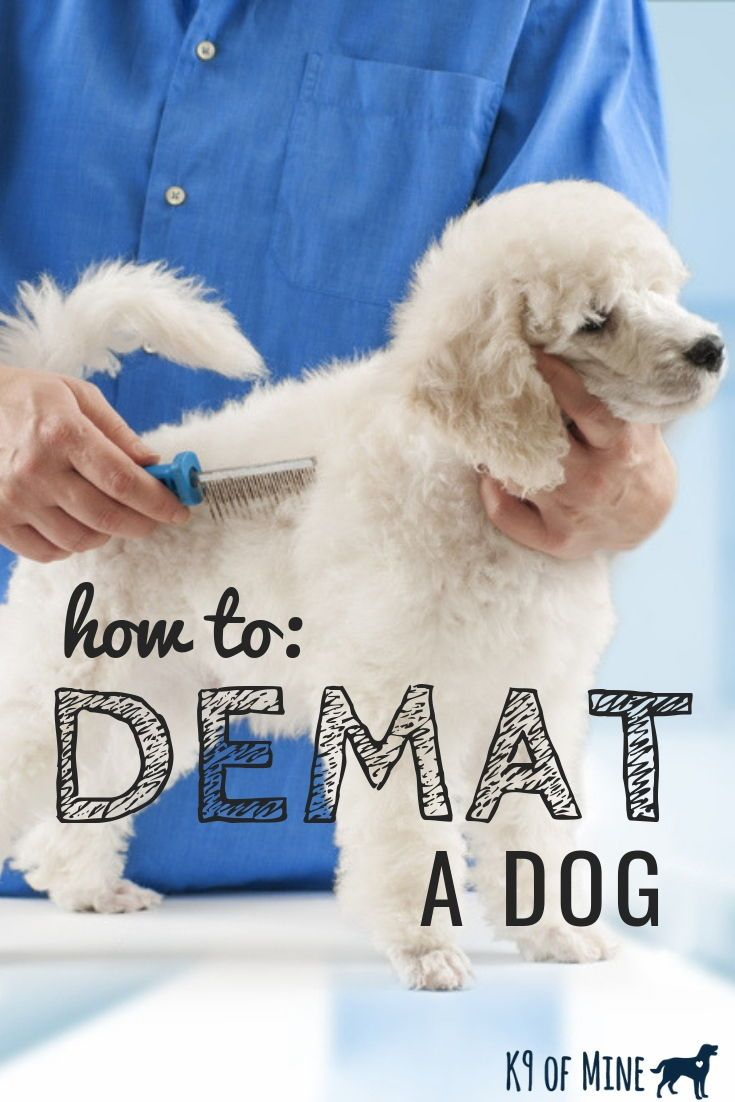 How To Demat A Dog Getting Rid Of Dog Mats Fur Tangles Matted Dog Hair Canine Care Poodle Grooming