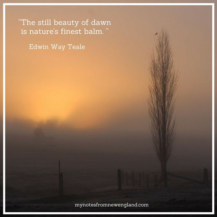 """The still beauty of dawn is nature's finest balm."" Edwin Way Teale"