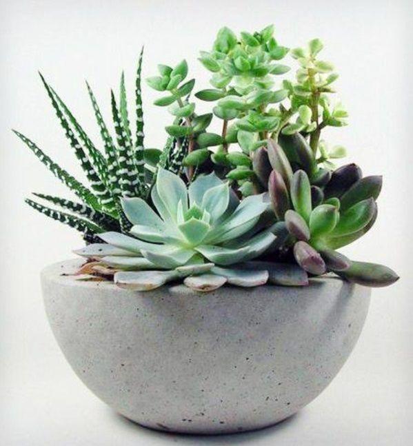 Zimmerpflanzen wenig licht topfpflanzen sukkulenten for Deko topfpflanzen