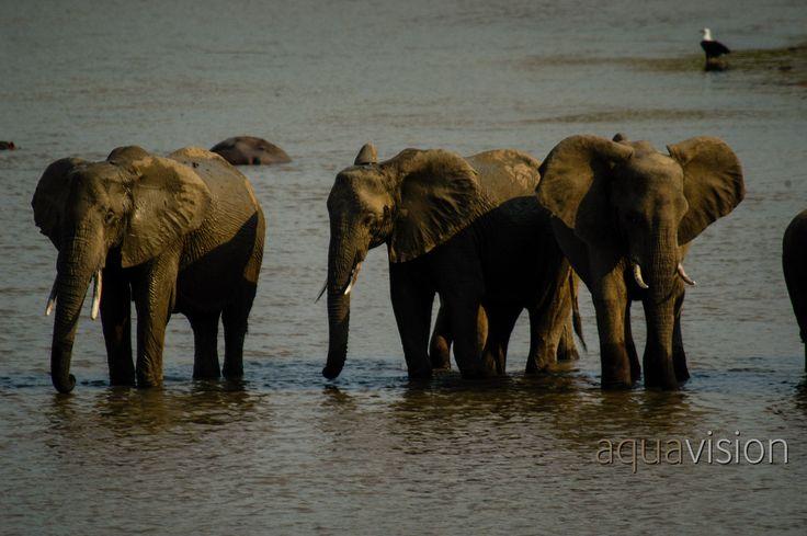 https://flic.kr/p/SuuQgS | DSC_0313.jpg | Elephant crossing